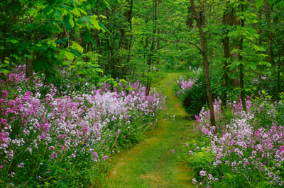 Woodland Path by Gary Thompson