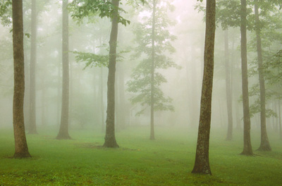 Fog at Crabtree Meadow by Gary Thompson