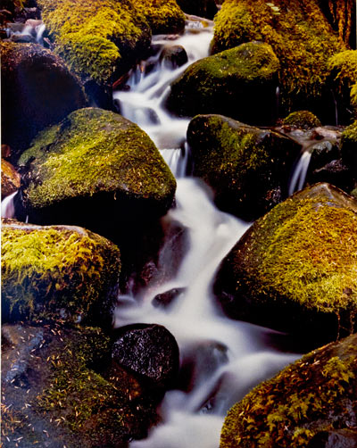 Mossy Cascade by Gary Thompson